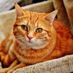 世界ネコ歩き(岩合光昭)癒し番組発見!猫好きにはたまらない。