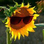 メガネの上からサングラス【オーバーサングラス】が便利です!